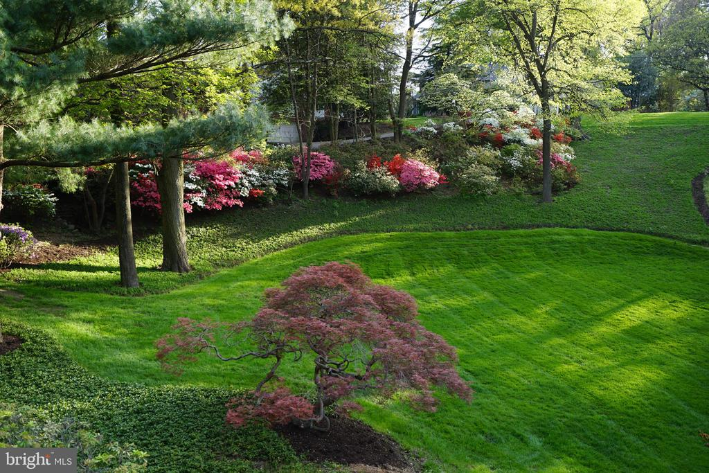 The hillside Azaleas in bloom - 2747 N NELSON ST, ARLINGTON
