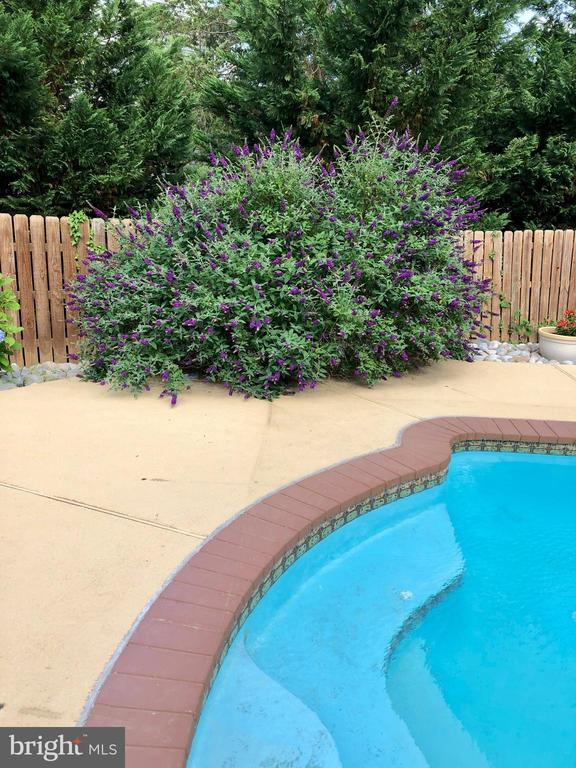 Summer flowering landscaping around pool - 5827 WESSEX LN, ALEXANDRIA