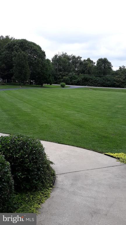 Front Lawn in the Spring from the front porch - 2407 FLAG MARSH RD, MOUNT AIRY