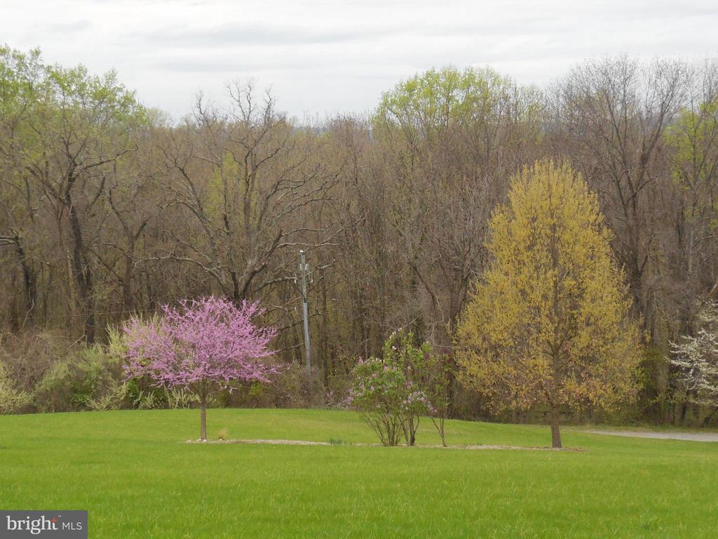 Spring flowering trees - 16080 GOLD CUP LN, PAEONIAN SPRINGS