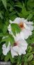 Spring Flowers - 2407 FLAG MARSH RD, MOUNT AIRY