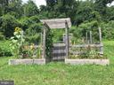 Raised garden beds in summer - 335 FODDERSTACK RD, WASHINGTON
