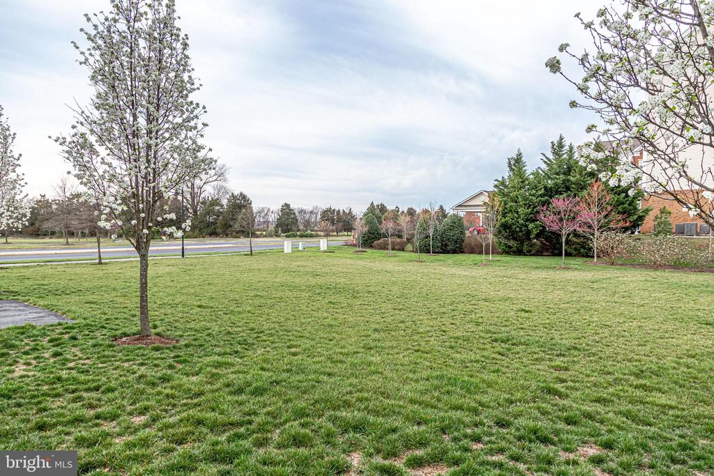 Grassy Area Behind House-Great for Play! - 20689 HOLYOKE DR, ASHBURN