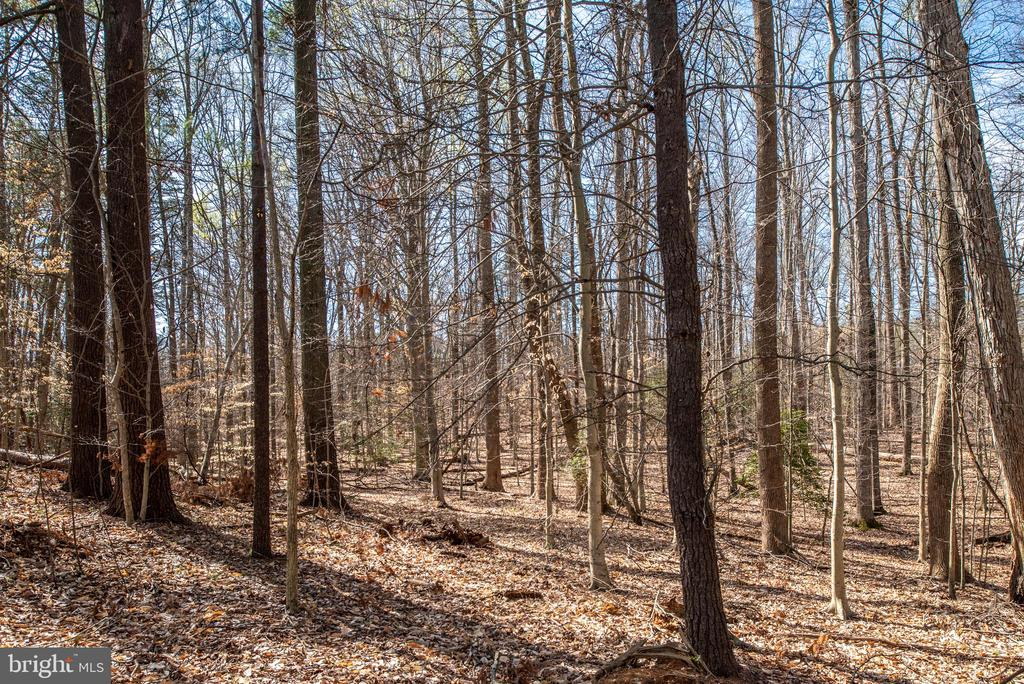 Tree lined - 28 FIREBERRY BLVD, STAFFORD