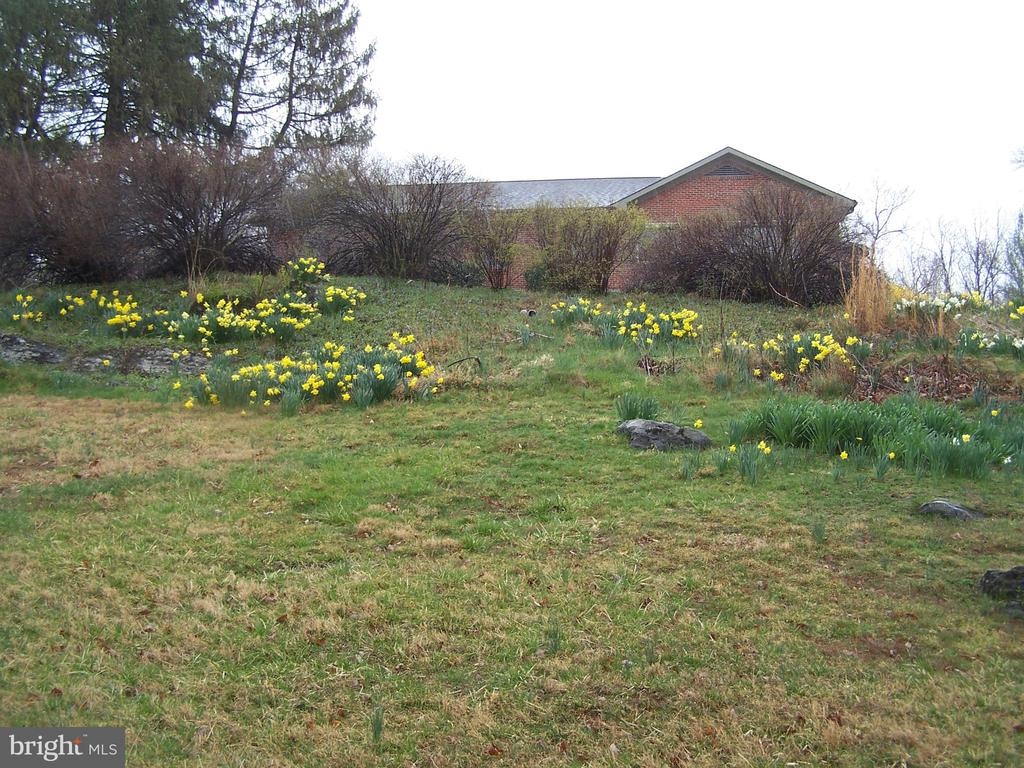 land scape   04/03/2020 - 3773 SHEPHERDSTOWN PIKE, MARTINSBURG