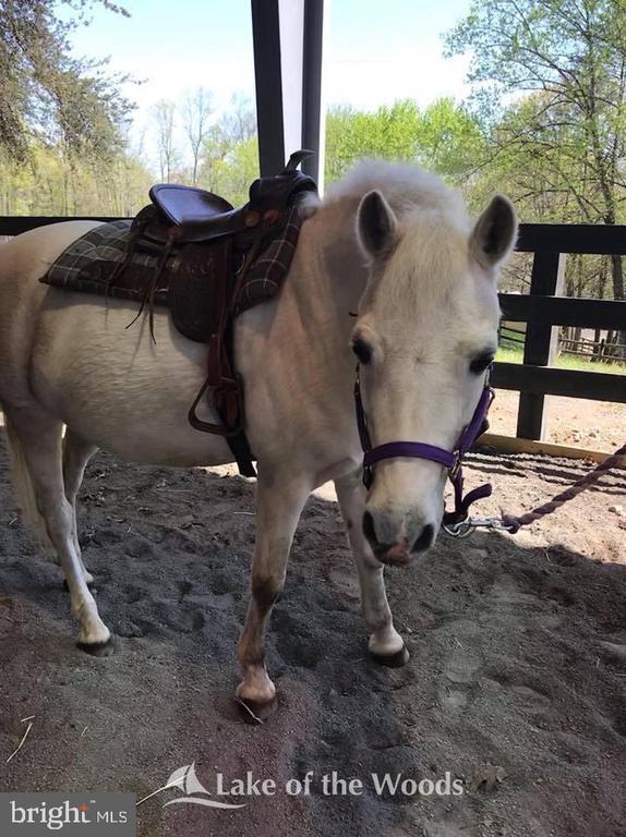 Equestrian center - 623 MT PLEASANT DR, LOCUST GROVE