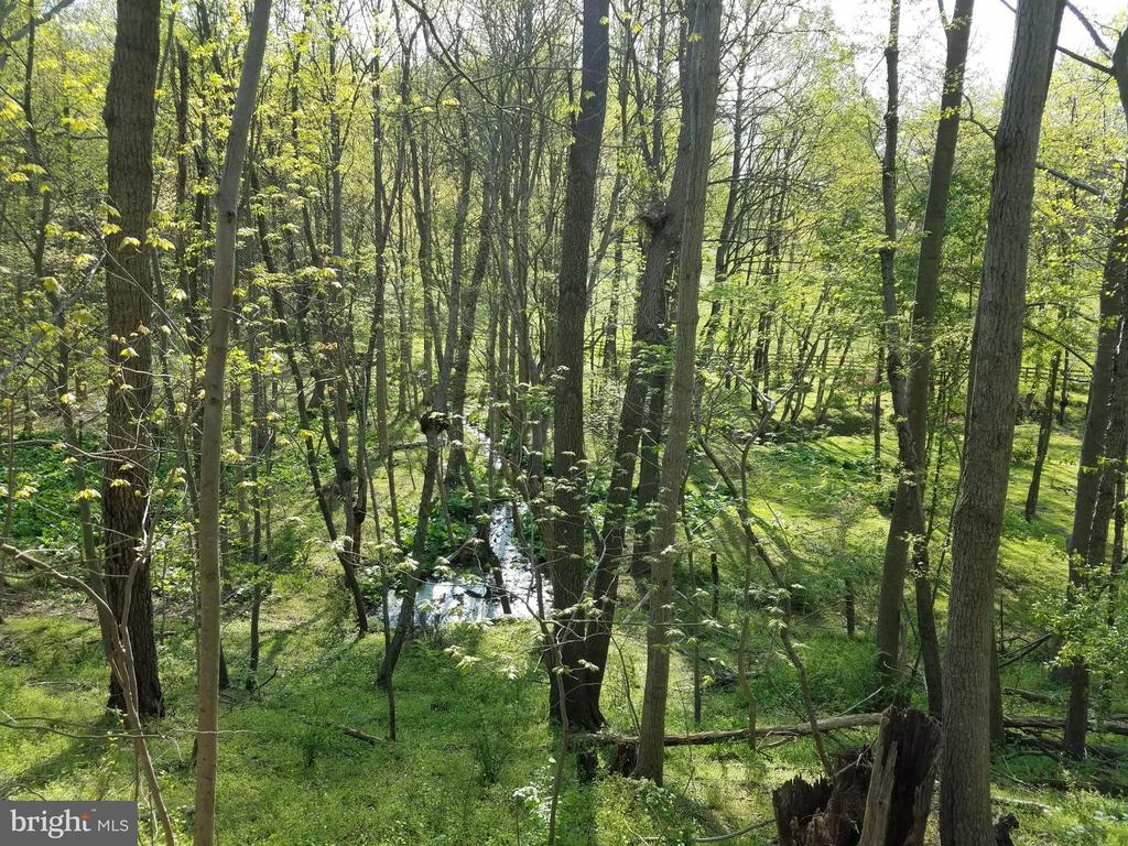Spring head and stream in woods behind property - 3290 POMMEL CT, MOUNT AIRY