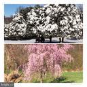 Seasonal Photos to be awed -! - 5917 WILD FLOWER CT, ROCKVILLE