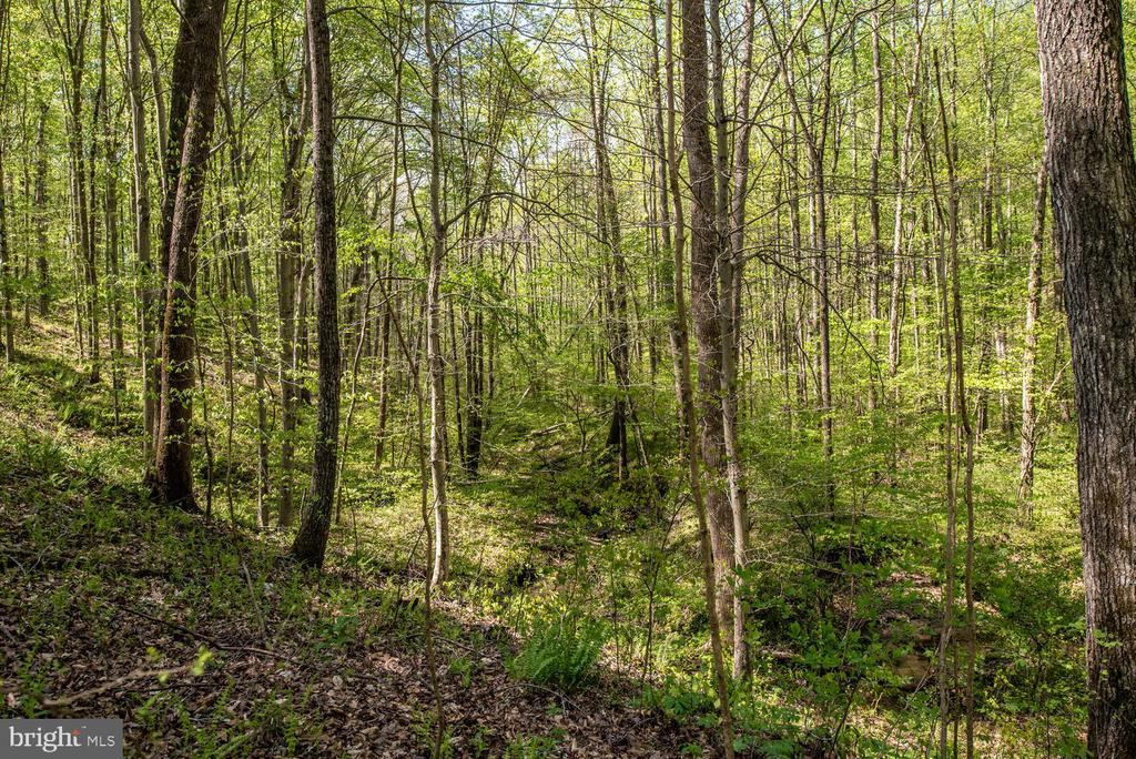Wooded view. - 325 SANDY RIDGE RD, FREDERICKSBURG