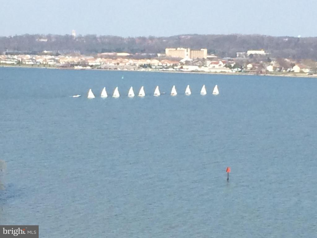 Wednesday sailboat lessons - 501 SLATERS LN #703, ALEXANDRIA