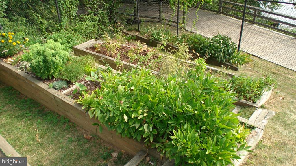 You can even grow your own veggies - 501 SLATERS LN #703, ALEXANDRIA