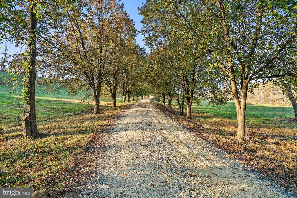 Tree lined entry - 19745 SHELBURNE GLEBE RD, PURCELLVILLE