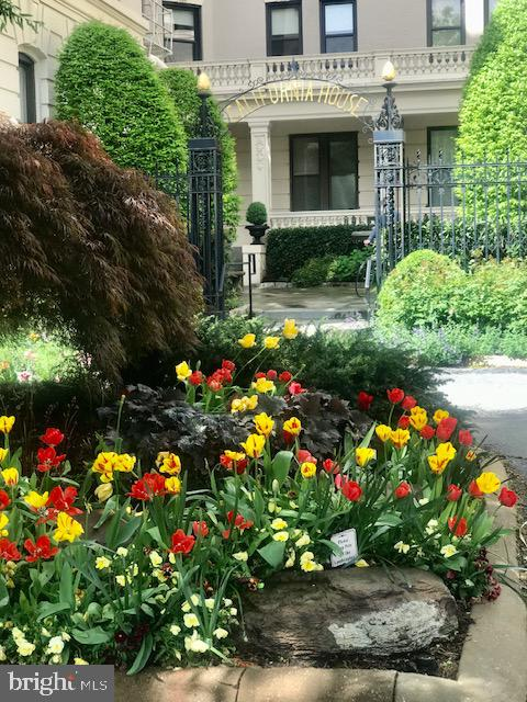 California Court with lovely spring tulips - 2153 CALIFORNIA ST NW #306, WASHINGTON