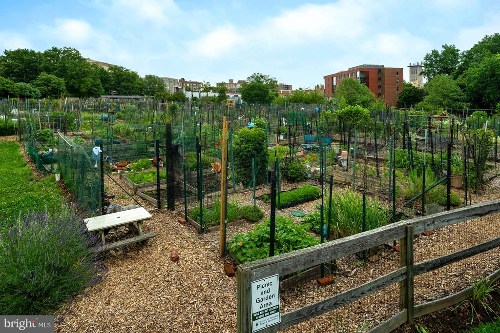 Newark St. Community Garden (Membership Required) - 3740 39TH ST NW #B152, WASHINGTON