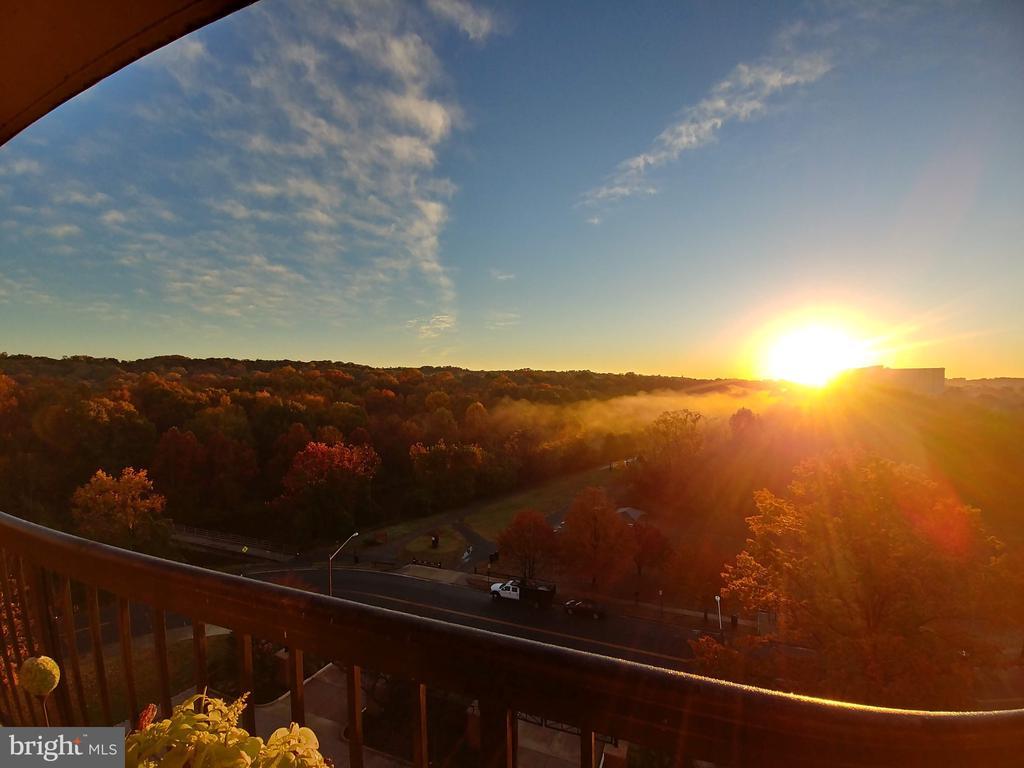 Sunrise in the fall - 200 N PICKETT ST #907, ALEXANDRIA