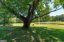 WONDERFUL MATURE TREES - 228 ROCK HILL CHURCH RD, STAFFORD