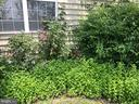 Back yard w mint garden - 11079 SANANDREW DR, NEW MARKET