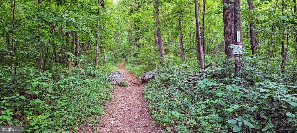 Appalachian Trail literally STEPS from the site - 0 SEMINOLE RD, CHESTER GAP
