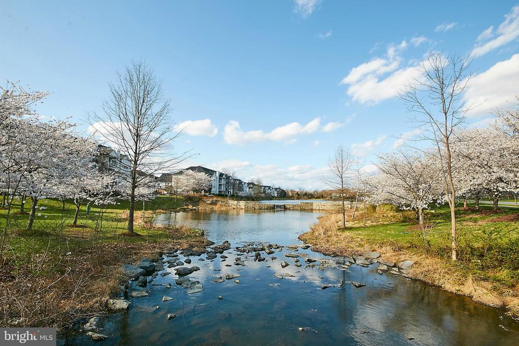 Community Lake - 26048 IVERSON DR, CHANTILLY