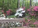 Springtime blooming Azaleas - 6811 WINTER LN, ANNANDALE