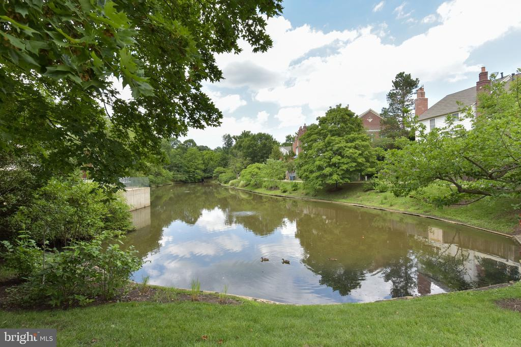 Quaker Hill pond - 1000 DARTMOUTH RD, ALEXANDRIA