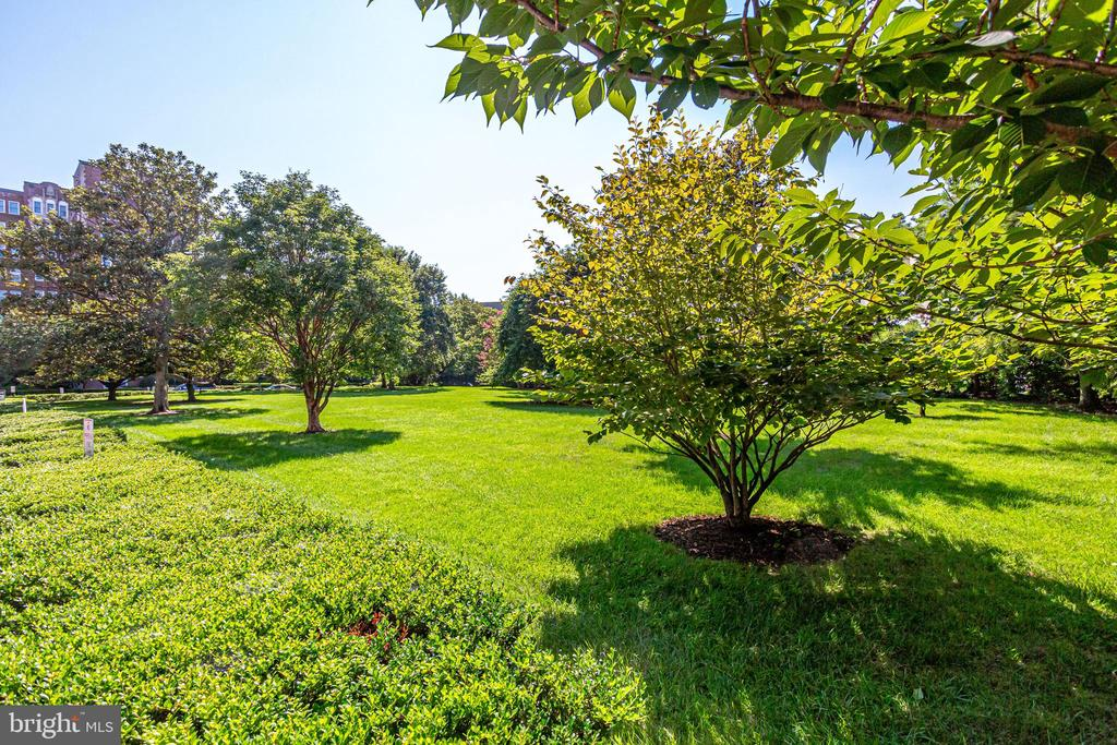 Surrounded by green space and lush trees - 3601 CONNECTICUT AVE NW #118, WASHINGTON