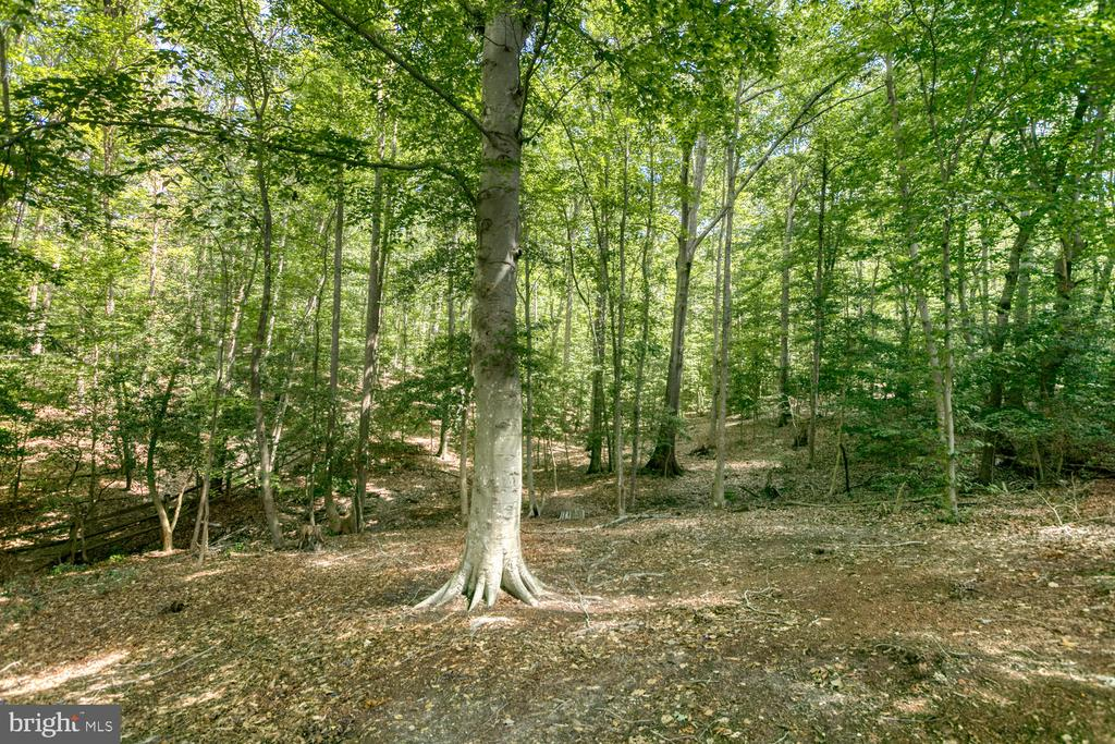 Perfect yard to watch nature and go exploring! - 3006 LUSITANIA DR, STAFFORD