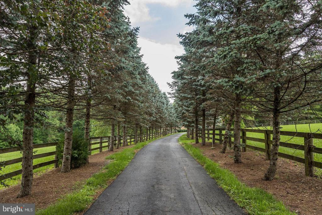Tree lined drive with paddocks on both sides - 14016 HARRISVILLE RD, MOUNT AIRY