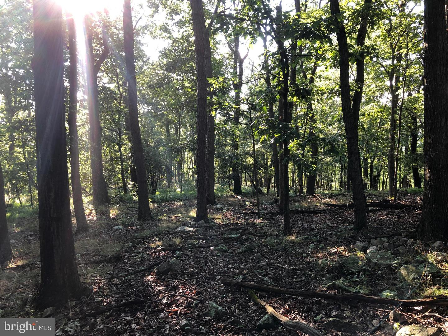 Land for Sale at Star Tannery, Virginia 22654 United States