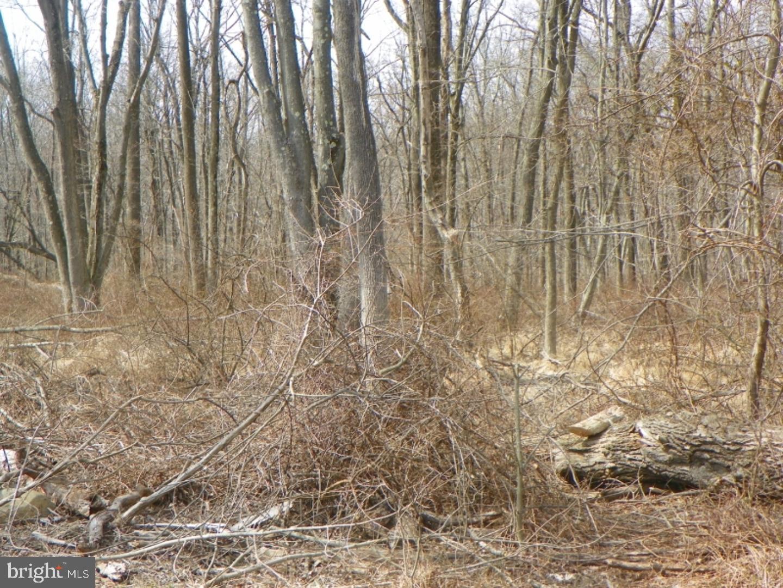土地,用地 为 销售 在 兰伯特维尔, 新泽西州 08530 美国