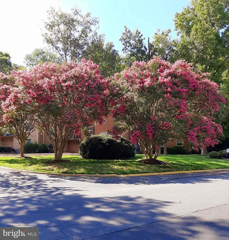 Community - 441 GREENBRIER CT #441, FREDERICKSBURG