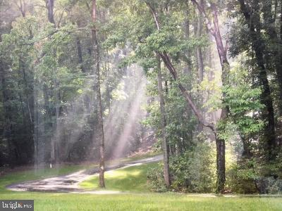 morning sunrays over driveway - 30831 PORTOBAGO TRL, PORT ROYAL