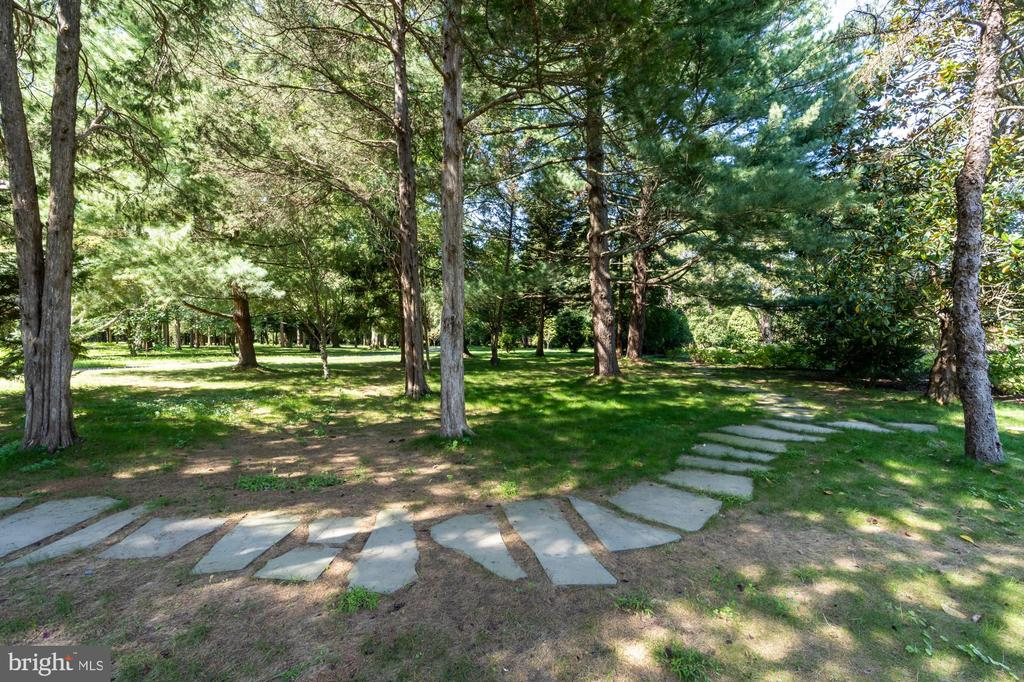 Walk through your private woods - 7979 E BOULEVARD DR, ALEXANDRIA