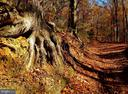 Crow's Nest Trail - 53 BROOKE CREST LN, STAFFORD