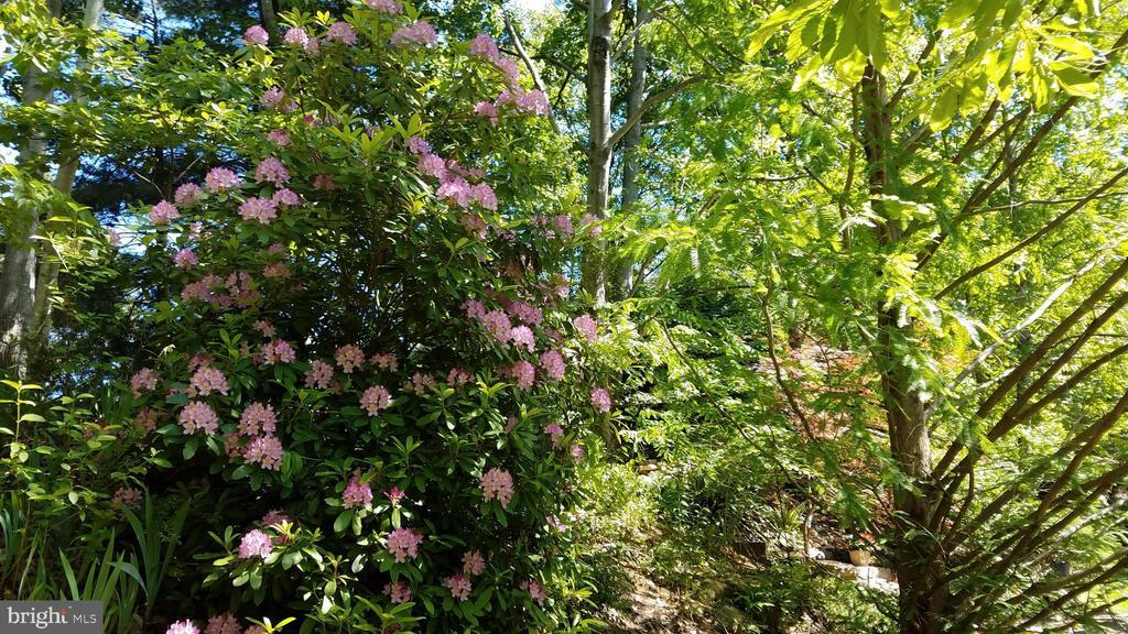Owner's yard pic, taken Spring 2020 - 25 MORRISSEY STONE CT, STAFFORD