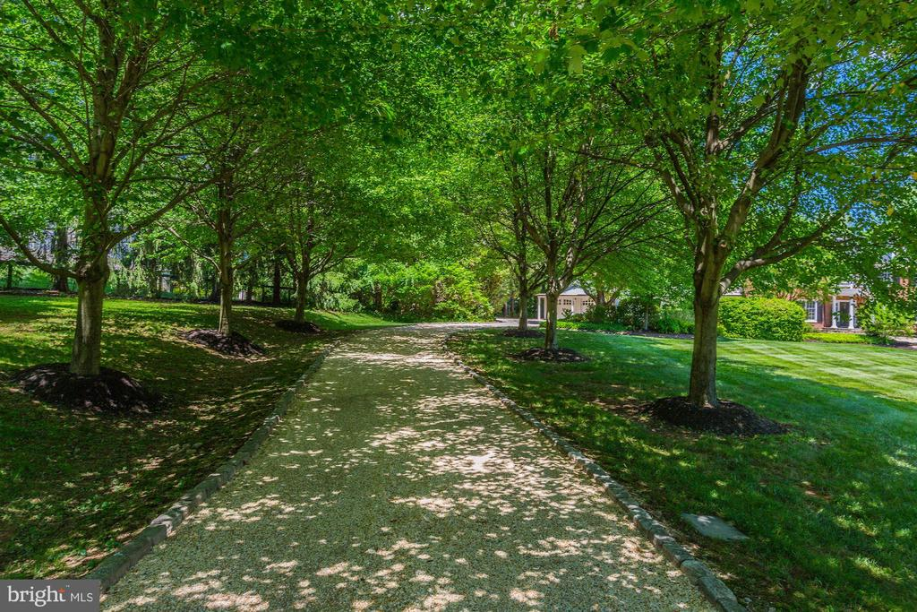 Tree Lined Driveway - 1201 TOWLSTON RD, GREAT FALLS