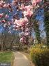 Local paved trail in the spring - 11580 WOODHOLLOW CT, RESTON