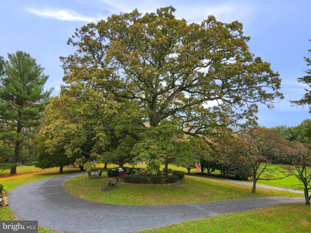 Historic Marker Oak- 300 Year Old White Oak - 9621 GEORGETOWN PIKE, GREAT FALLS