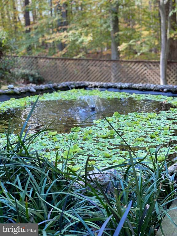 Freshwater Pond w/Koi Fish - 11798 TARGET CT, WOODBRIDGE