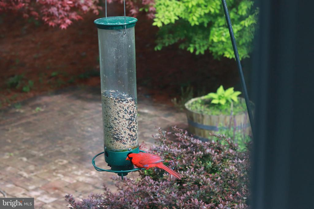 Seller shared image of wildlife visiting the home. - 6287 IVERSON TER S, FREDERICK