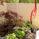 Inside patio garden w/ Japanese maple - 11503 MAPLE RIDGE RD, RESTON