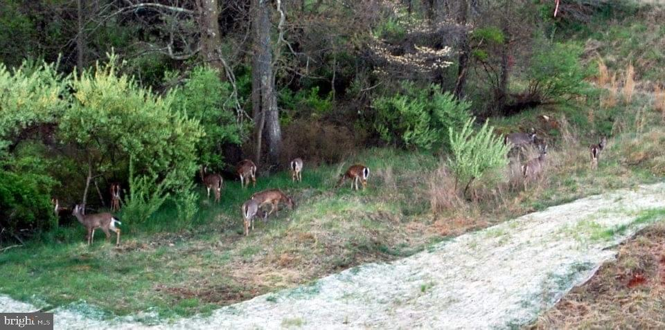 Deer near the path out back. - 17652 TEDLER CIR, ROUND HILL