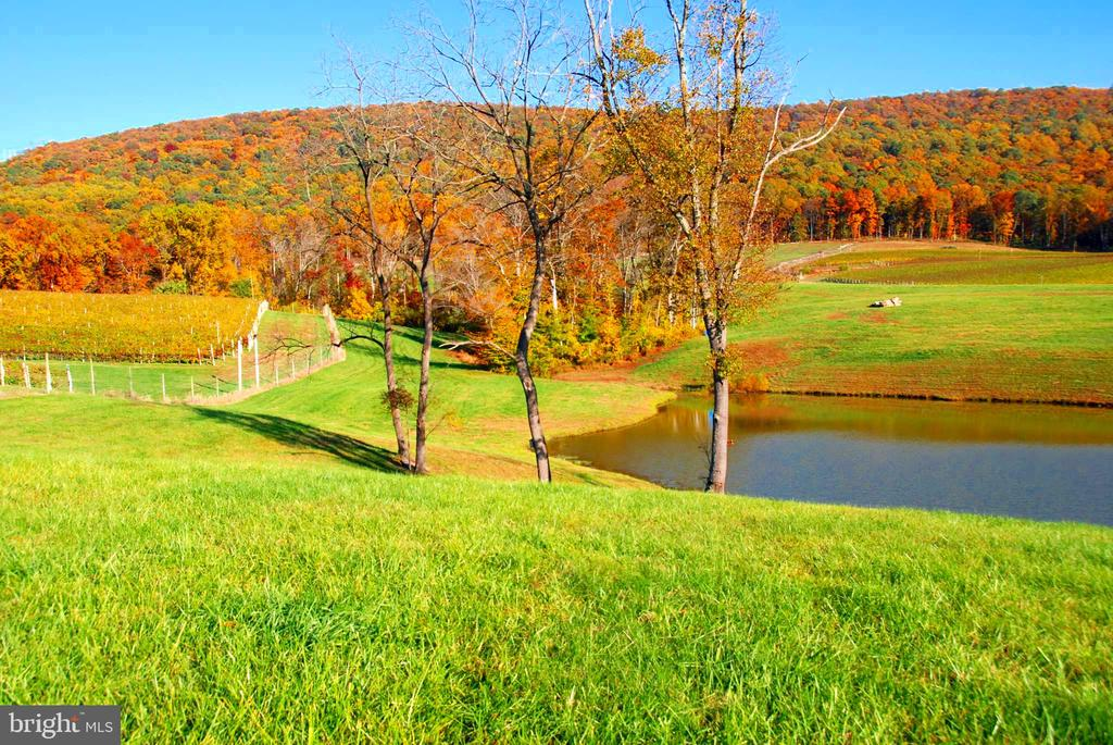 Pond, Vineyards block 3 & 4 and your mountain - 12138 HARPERS FERRY RD, PURCELLVILLE