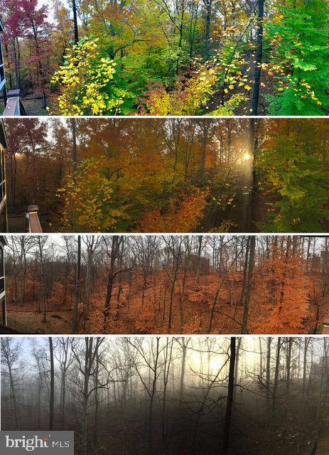 Four seasons of foliage - 206 GREENHOW CT SE, LEESBURG
