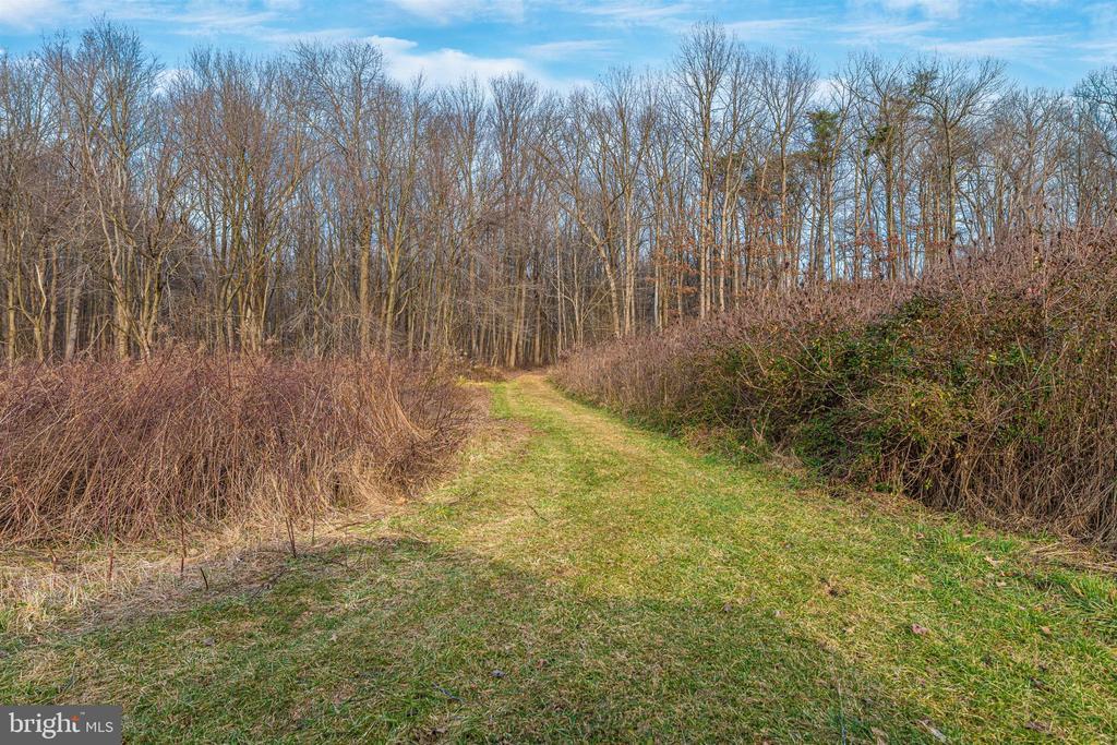 trails through woods - 13001 PENN SHOP RD, MOUNT AIRY