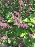 FLOWERING BUSHES BURST WITH COLOR - 333 CARDINAL GLEN CIR, STERLING