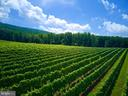 Meticulously manicured vineyards - 12138 HARPERS FERRY RD, PURCELLVILLE