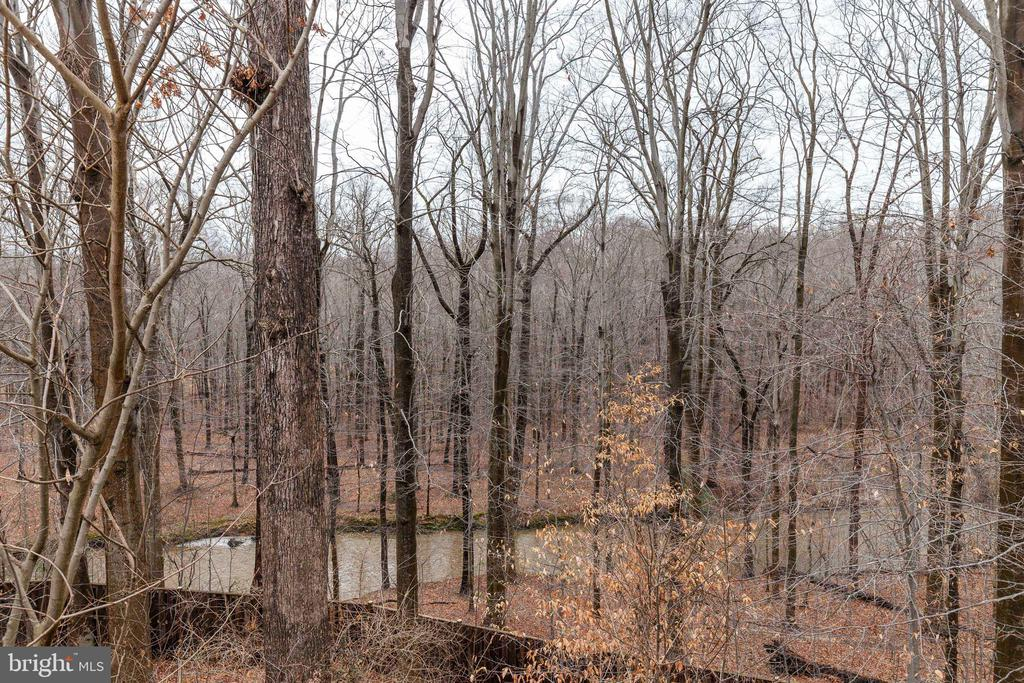 View from deck - 6221 HASKIN CT, BURKE