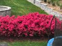 Colorful Landscaping - 15230 BOWMANS FOLLY DR, MANASSAS