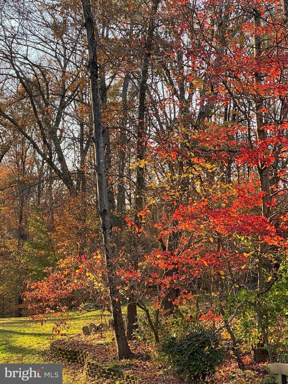Fall Foliage - 10613 PINEVIEW RD, MANASSAS